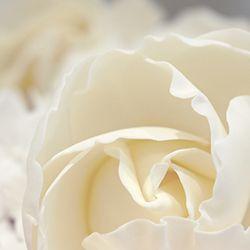 Mama Cakes Ivory sugar rose